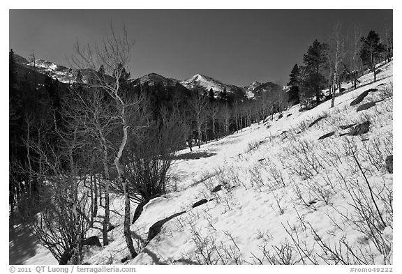 Glacier Basin in winter. Rocky Mountain National Park (black and white)
