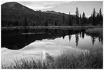 Beaver Pond, Kawuneeche Valley. Rocky Mountain National Park, Colorado, USA. (black and white)