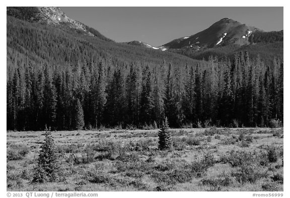 Meadow in Kawuneeche Valley. Rocky Mountain National Park (black and white)