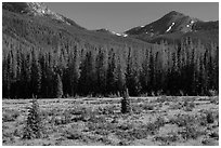 Meadow in Kawuneeche Valley. Rocky Mountain National Park, Colorado, USA. (black and white)