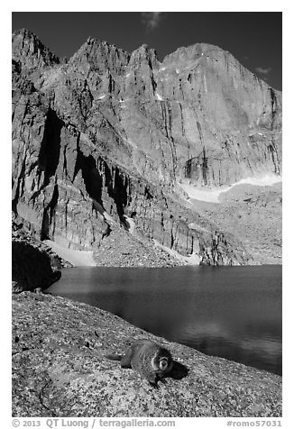 Marmot on shore of Chasm Lake below Longs peak. Rocky Mountain National Park (black and white)