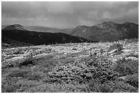 Bands of krummholz. Rocky Mountain National Park, Colorado, USA. (black and white)