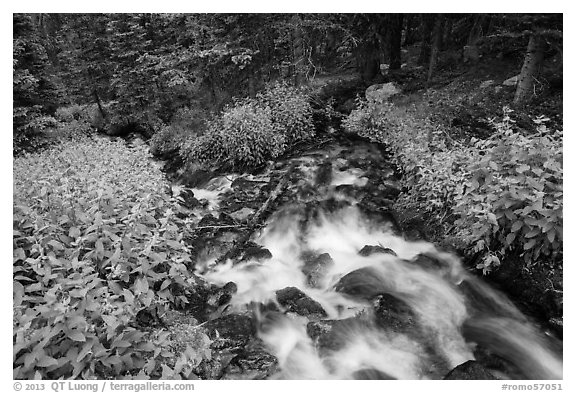 Stream cascading in forest. Rocky Mountain National Park (black and white)