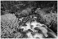 Stream cascading in forest. Rocky Mountain National Park, Colorado, USA. (black and white)
