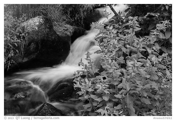 Wildflowers and cascading stream. Rocky Mountain National Park (black and white)