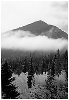 Trees, Fog, and Peak, Glacier Basin. Rocky Mountain National Park, Colorado, USA. (black and white)