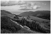 Krumholtz and alpine tundra at sunset. Rocky Mountain National Park ( black and white)