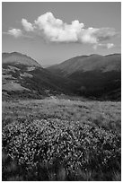 Looking down Old Fall River valley. Rocky Mountain National Park ( black and white)