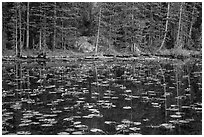 Water lillies and trees, Nymph Lake. Rocky Mountain National Park ( black and white)