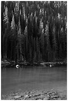 Boulders and forest on Dream Lake shore. Rocky Mountain National Park ( black and white)