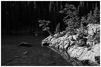Trees on shore of Dream Lake. Rocky Mountain National Park ( black and white)