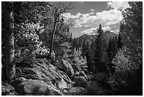 Longs Peak seen from forest opening in autumn. Rocky Mountain National Park ( black and white)