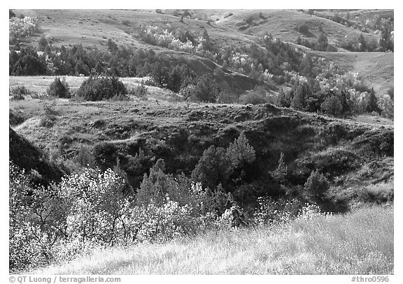 Grasses, badlands and trees in North unit, autumn. Theodore Roosevelt National Park (black and white)