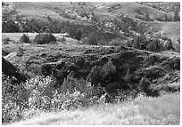 Grasses, badlands and trees in North unit, autumn. Theodore Roosevelt National Park, North Dakota, USA. (black and white)