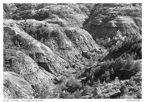 Erosion formation and trees in North unit. Theodore Roosevelt National Park (black and white)