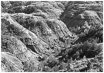 Erosion formation and trees in North unit. Theodore Roosevelt National Park, North Dakota, USA. (black and white)