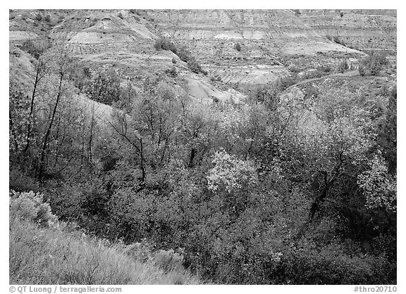 Fall foliage and badlands, North Unit. Theodore Roosevelt National Park (black and white)
