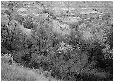 Fall foliage and badlands, North Unit. Theodore Roosevelt National Park ( black and white)