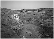Petrified log stump at dusk, South Unit. Theodore Roosevelt National Park, North Dakota, USA. (black and white)
