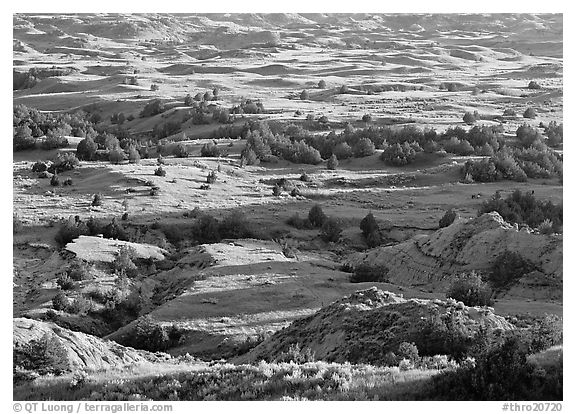 Prairie, trees, and badlands, Boicourt overlook, South Unit. Theodore Roosevelt  National Park (black and white)