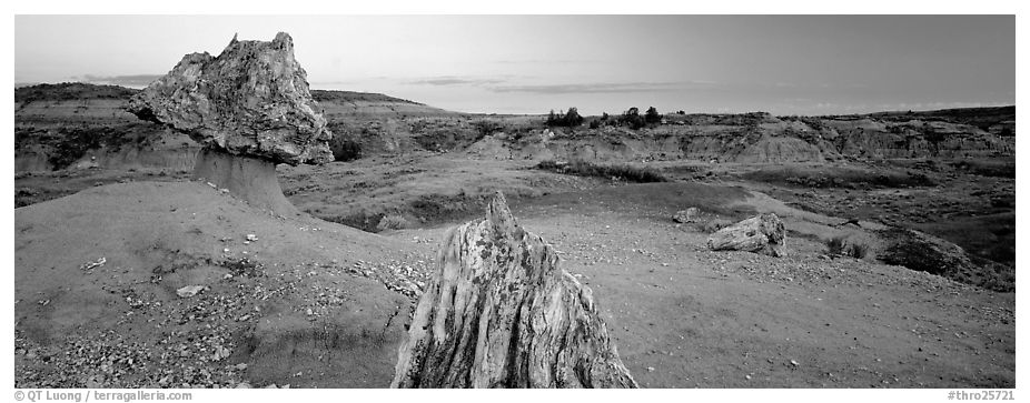 Petrified wood in badlands landscape. Theodore Roosevelt National Park (black and white)
