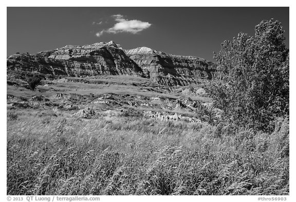Grasses, cottonwood, and colorful badlands. Theodore Roosevelt National Park (black and white)