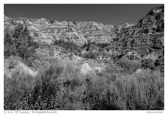 Summer vegetation and multi-colored badlands. Theodore Roosevelt National Park (black and white)