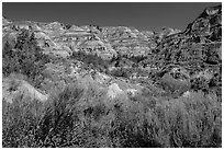 Summer vegetation and multi-colored badlands. Theodore Roosevelt National Park, North Dakota, USA. (black and white)