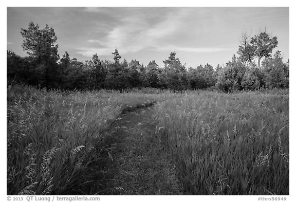 Grassy trail, Elkhorn Ranch Unit. Theodore Roosevelt National Park (black and white)