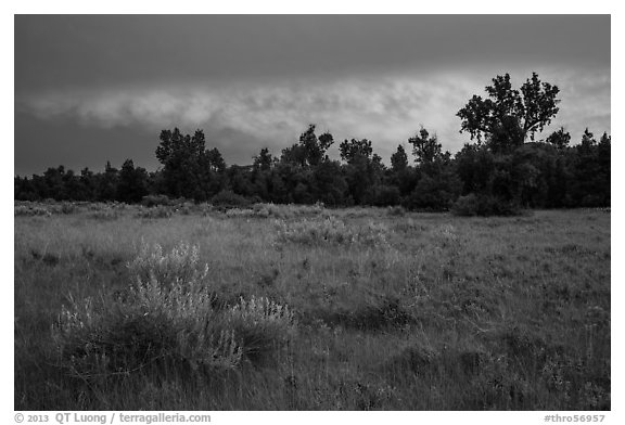 Meadow and cottonwoods at sunset, Elkhorn Ranch Unit. Theodore Roosevelt National Park (black and white)