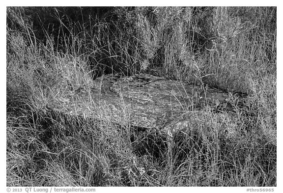 Foundation stone of Elkhorn Ranch amongst grasses and summer flowers. Theodore Roosevelt National Park (black and white)