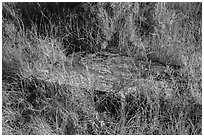 Foundation stone of Elkhorn Ranch amongst grasses and summer flowers. Theodore Roosevelt National Park ( black and white)