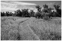 Trail overgrown with grasses, Elkhorn Ranch Unit. Theodore Roosevelt National Park, North Dakota, USA. (black and white)