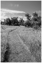 Soft grass-covered trail, Elkhorn Ranch Unit. Theodore Roosevelt National Park ( black and white)