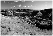 Forested Badlands. Theodore Roosevelt National Park, North Dakota, USA. (black and white)