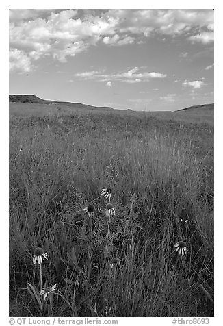 Tall grass prairie and wildflowers, South Unit, late afternoon. Theodore Roosevelt National Park (black and white)