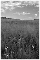 Tall grass prairie and wildflowers, South Unit, late afternoon. Theodore Roosevelt National Park, North Dakota, USA. (black and white)
