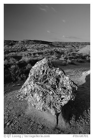 Colorful Petrified stump. Theodore Roosevelt National Park (black and white)