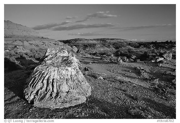 Big Petrified stump and badlands, late afternoon. Theodore Roosevelt National Park (black and white)