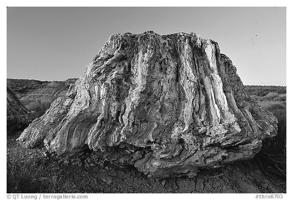 Petrified stump of ancient sequoia tree, late afternoon. Theodore Roosevelt National Park (black and white)