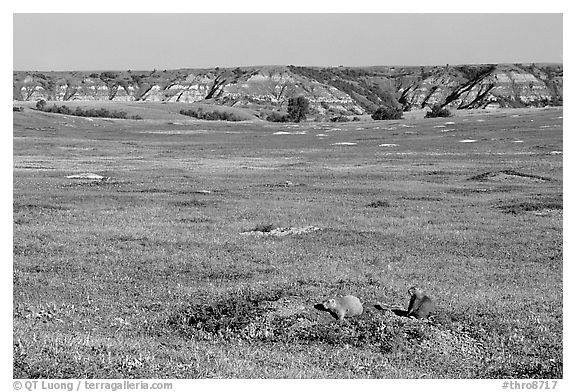 Prairie Dog town, South Unit. Theodore Roosevelt National Park (black and white)