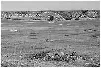 Prairie Dog town, South Unit. Theodore Roosevelt National Park ( black and white)