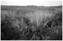 Tall grass prairie in fall. Wind Cave National Park, South Dakota, USA. (black and white)