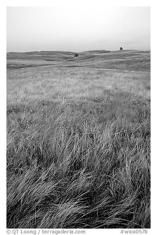 Tall grass prairie. Wind Cave National Park (black and white)