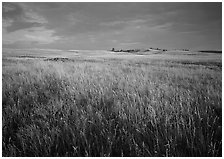 Tall prairie grass and dark sky at Bison Flats,  early morning. Wind Cave  National Park ( black and white)