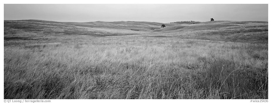 Prairie grasses on cloudy autumn morning. Wind Cave National Park (black and white)