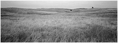 Prairie grasses on cloudy autumn morning. Wind Cave  National Park (Panoramic black and white)