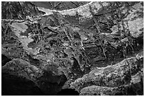 Thin blades of calcite projecting from cave walls and ceilings. Wind Cave National Park ( black and white)