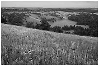 Grasses and flowers on Rankin Ridge above rolling hills with pine forests. Wind Cave National Park ( black and white)