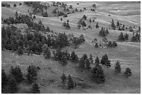 Rolling hills with ponderosa pines and grasslands. Wind Cave National Park ( black and white)